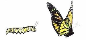 catterpillar-bfly